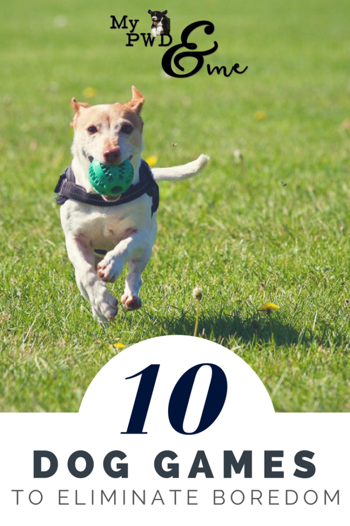 My PWD and Me - 10 Dog Games to Eliminate Boredom