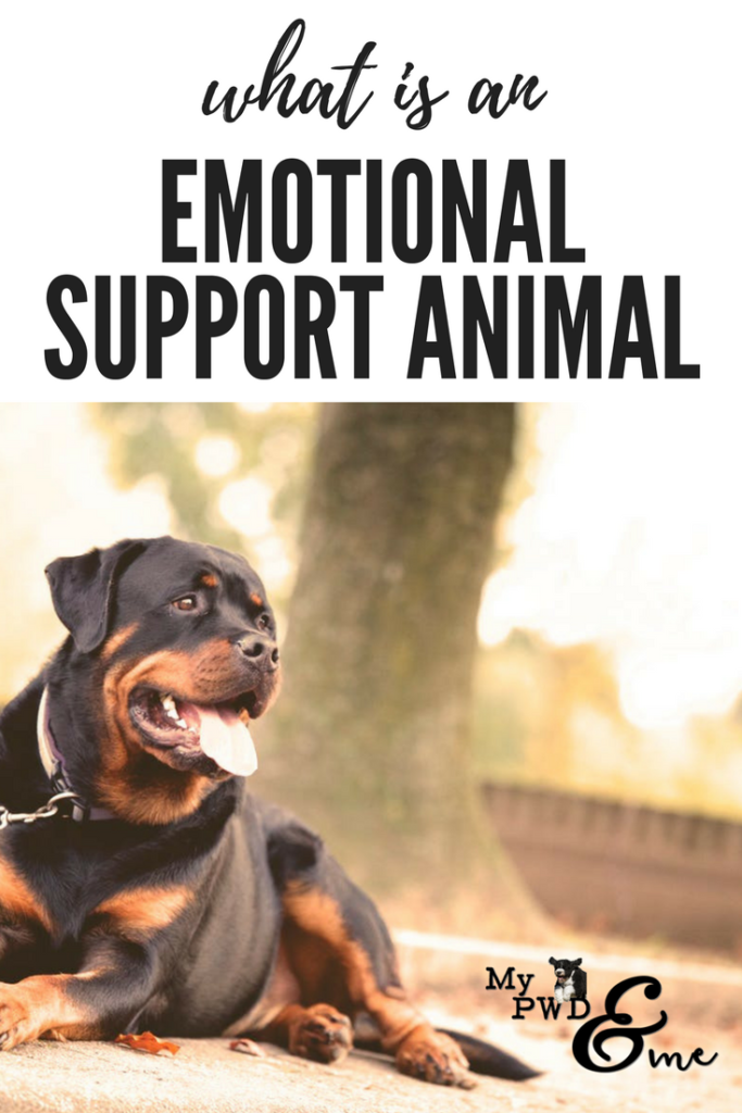 My PWD and Me - What Is an Emotional Support Animal