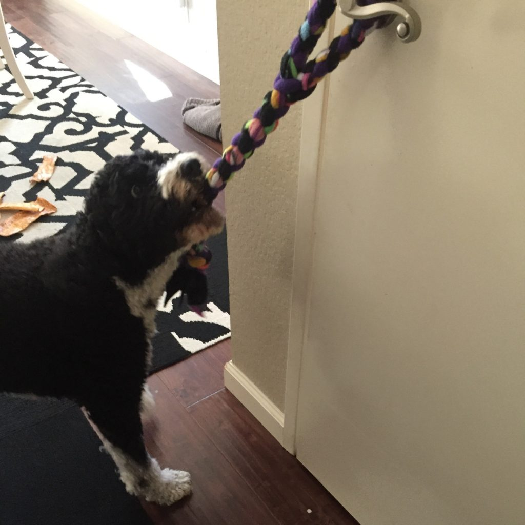 My PWD and Me - Dog Games - Pull Door