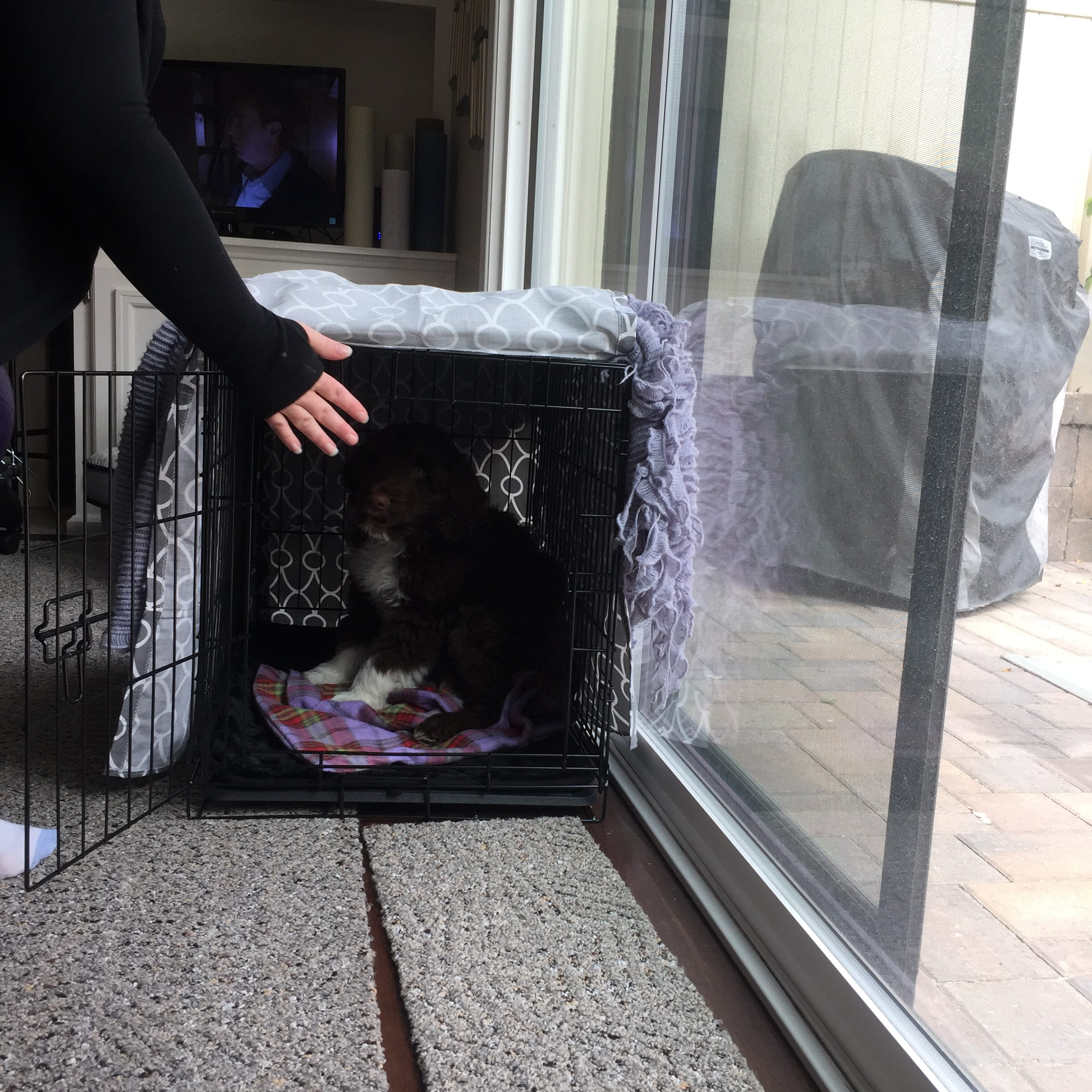Crate Training Your Puppy - My PWD and Me - Mr Magoo