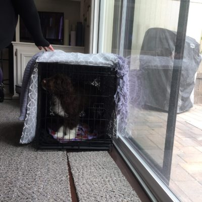 Puppy Series: Crate Training