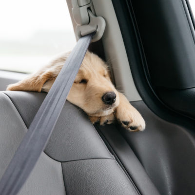 Puppy Series: Managing Dog Motion Sickness