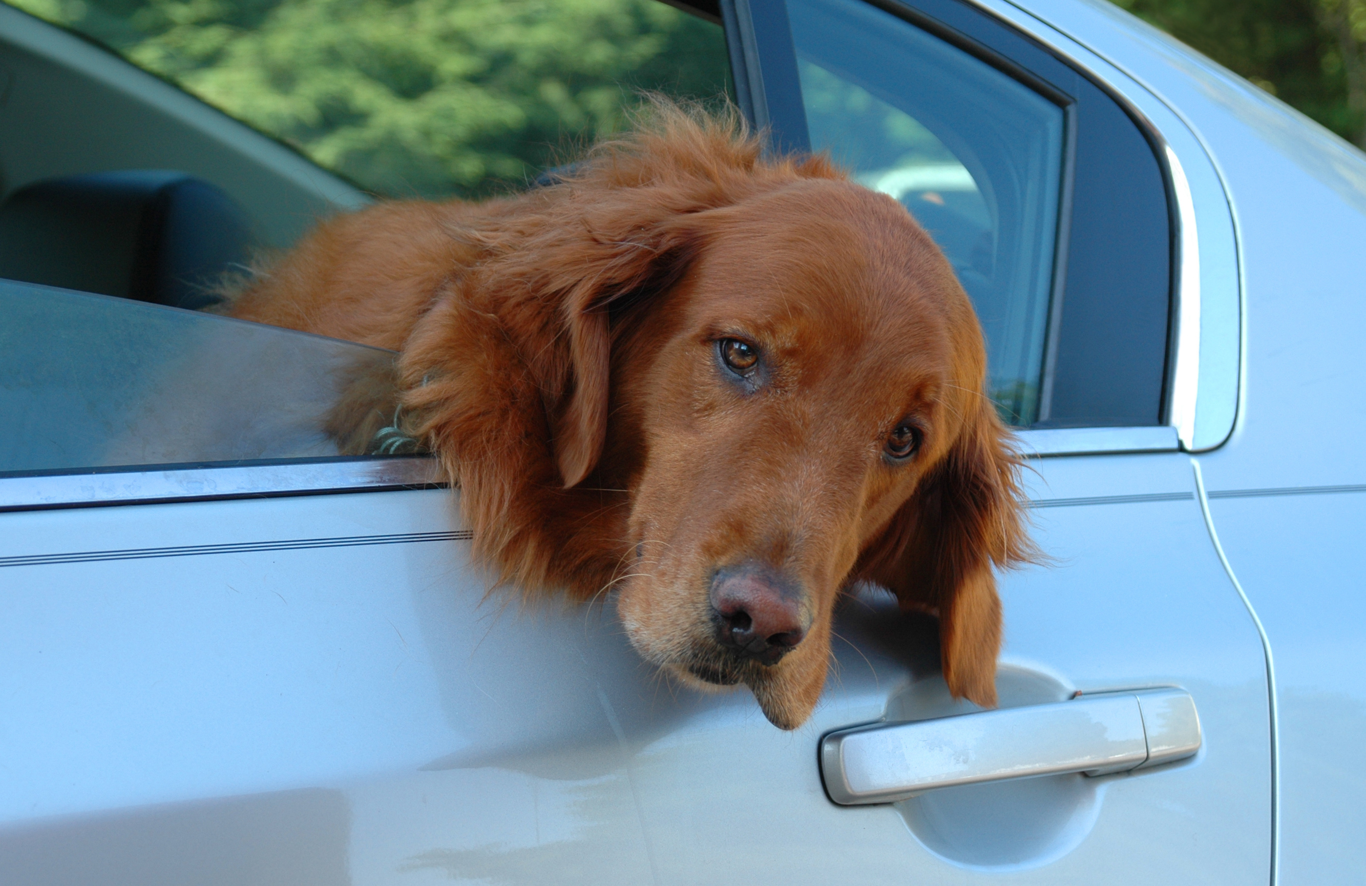 Puppy Series: Managing Dog Motion Sickness - My PWD and Me