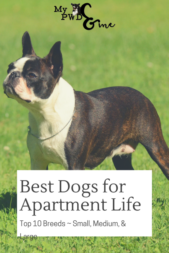 Best Dogs for Apartment Life - My PWD and Me