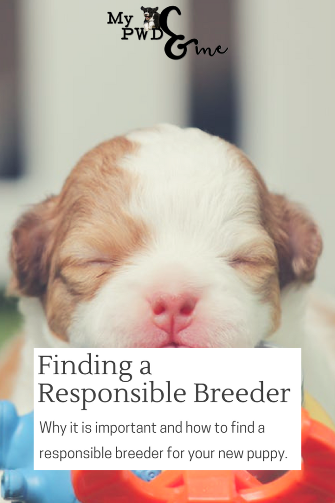 Finding a Responsible Breeder - My PWD and Me