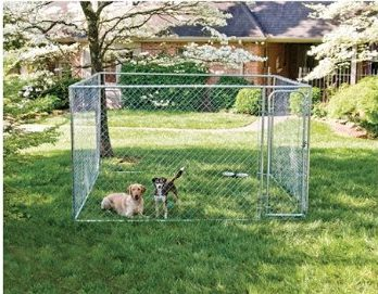 Puppy Proofing Your Yard - My PWD and Me